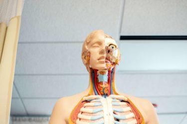 海外医学生の90%以上が使う定番解剖学アプリComplete Anatomyを解説